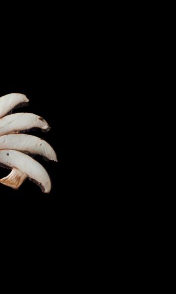 Parallax5_mushrooms